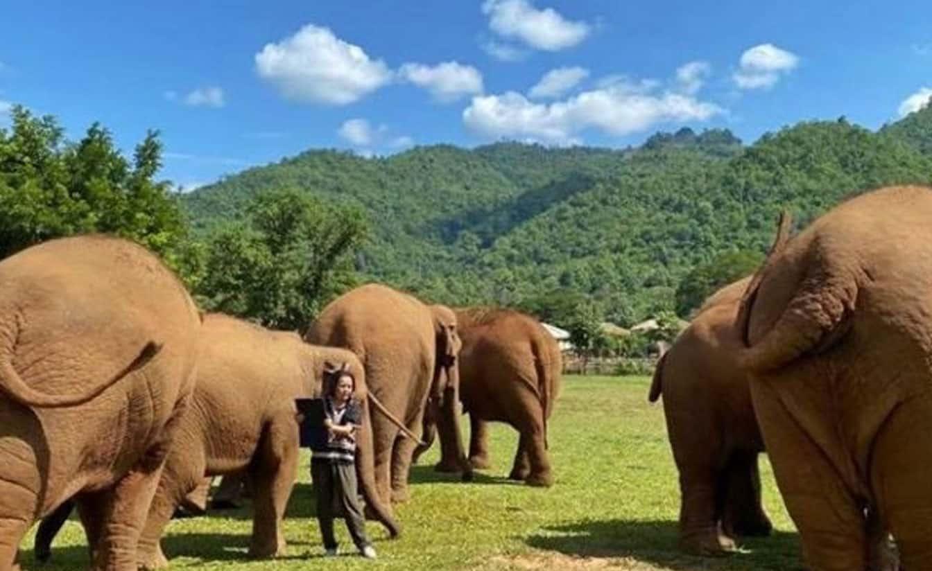 Elephant Nature Chiang Mai