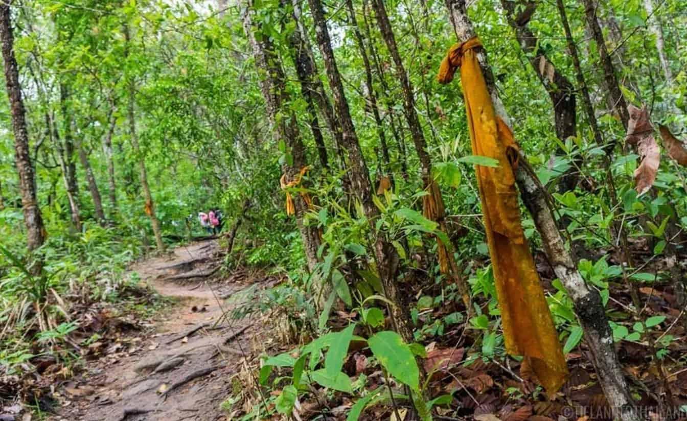 Pilgrim's Trail